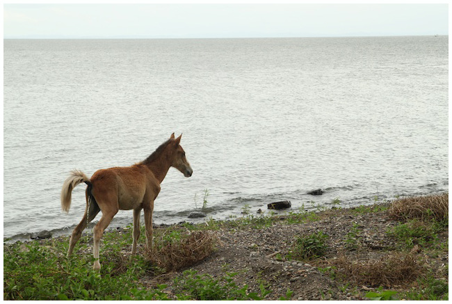 Baby horse on Ometepe... what's wrong with this photo?