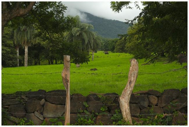Fields surrounding volcanoes on Ometepe, Nicaragua