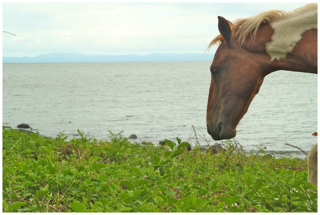 A horse looking out over Lake Nicaragua