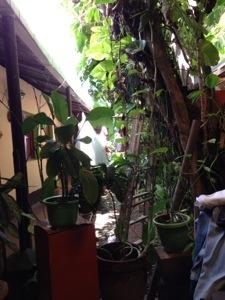 A courtyard inside Hostal San Angel, Granada, Nicaragua