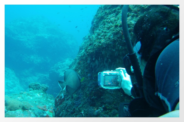 Photographing an angelfish