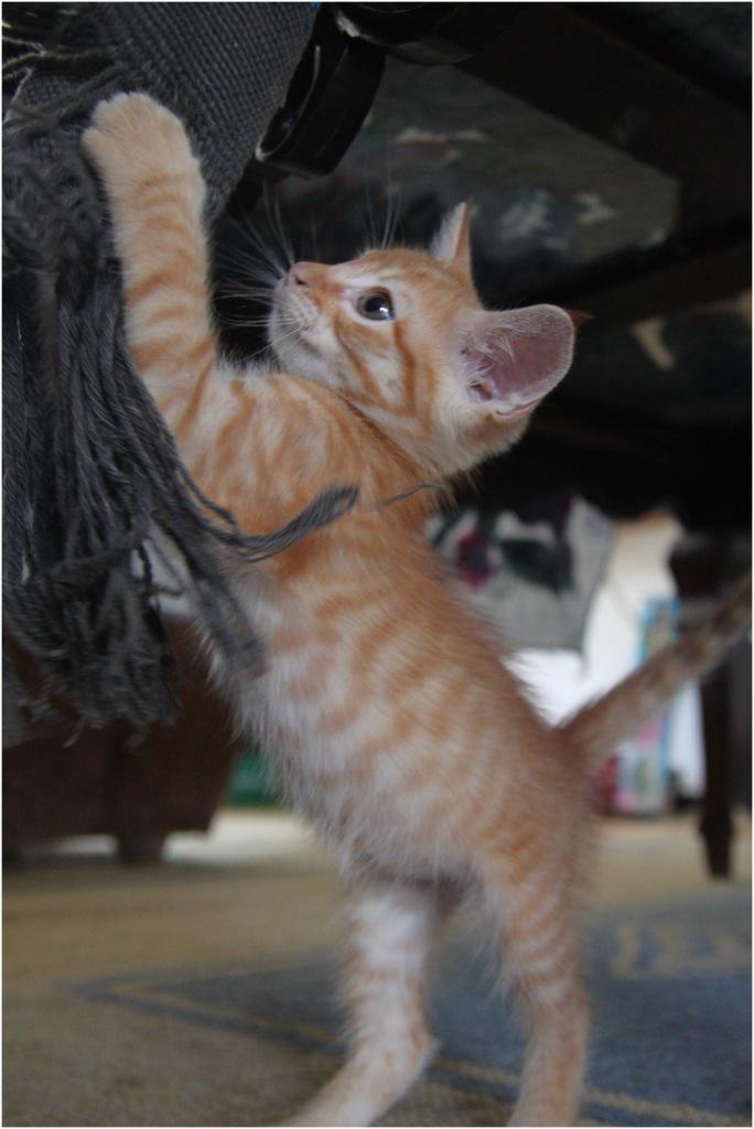 Kitten san juan del sur nicaragua